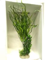 PLANT LILY GRASS XL Green